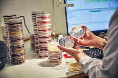 Biomedicinsk analytiker på Gävle sjukhus mars 2021. BMA analys av odlingar och odling